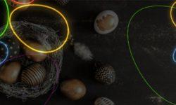 Munade Koorumine Coolbet'is – Ennusta millisest muna koorub tibu esimesena